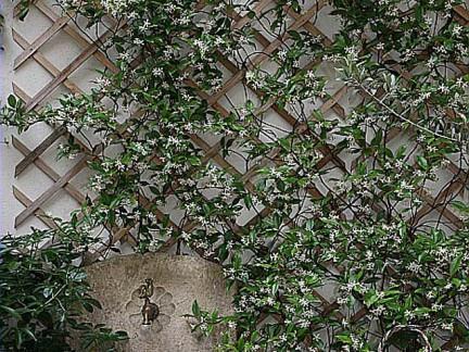 treille devant un mur en béton
